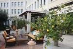 Лимоны в саду отеля