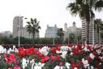 Мост цветов в Валенсии