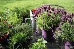 Лаванда и ароматные травы