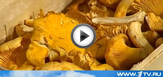 Видео рецепт приготовления блюда полента с лисичками, показан на Первом канале