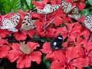 Малайзийские бабочки