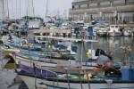 Это не бутафория: рыбу в рестораны порта Яффы действительно доставляют местные рыбаки