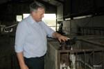 Алан Кингстон с четырехдневным теленком