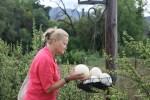Корзины с пустыми страусиными яйцами развешаны под фонарями на ферме