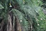 Крохотные желтые птички вьют себе гнезда