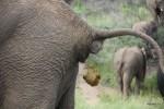 Слониха поела