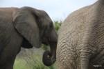 Шкура слона  при ближайшем рассмотрении