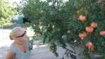 В саду фермера, выращивающего перцы, стоит гранатовое дерево