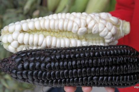 Перуанская кукуруза