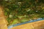 Сельдерей маринуется в соевом соусе и специях