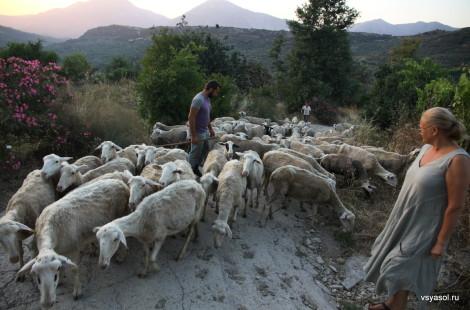 Овец гонят на закате. Аксос, Крит