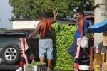 На оптовом рынке в Панаме разгружают зеленые бананы