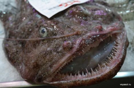 Рыба-черт на рынке в Пальме