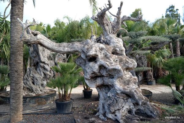 Эту скульуптуру создала природа