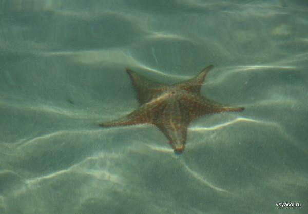 Морские звезды дали имя пляжу Эстрелья