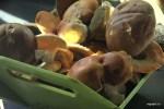 Утренний сбор грибов на даче