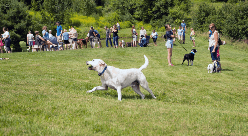 Image of dog playing in the field at Dog Mountain, Home of Stephen Huneck Gallery