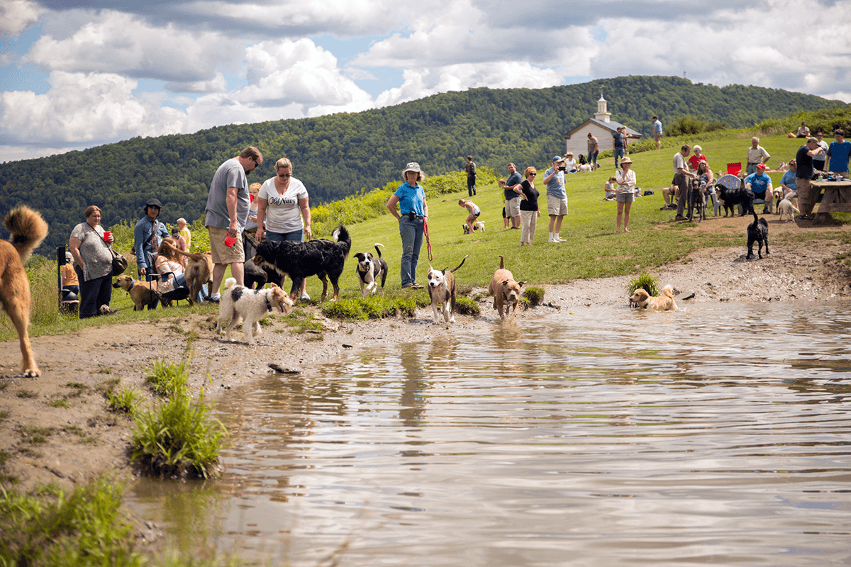 Image of dogs at play in the pond while humans talk and watch at Dog Mountain, Home of Stephen Huneck Gallery