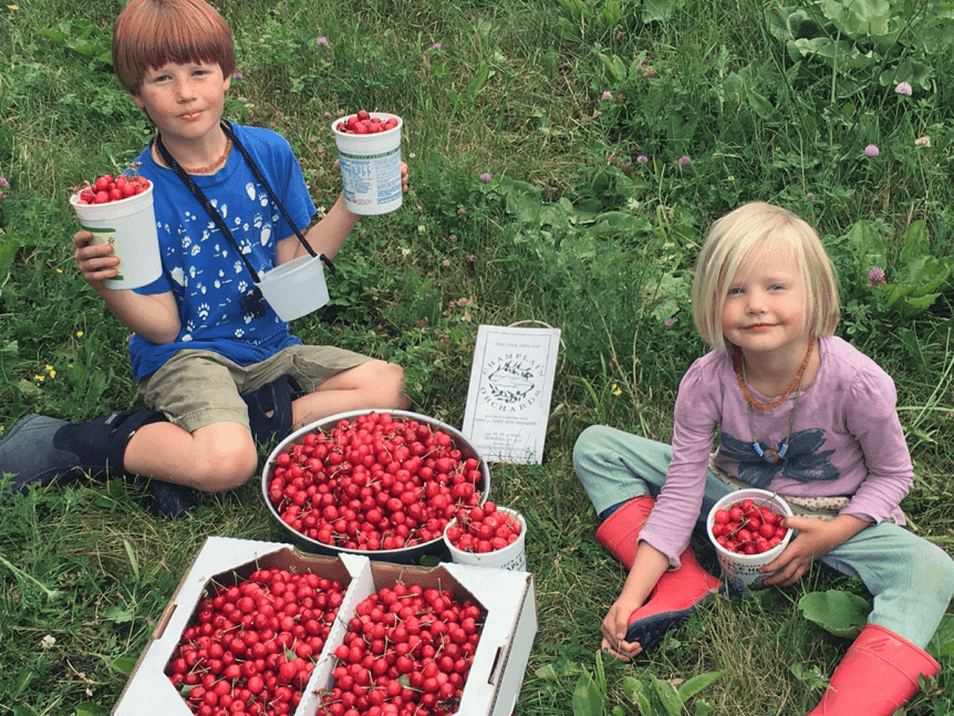 Image of kids with fresh picked cherries