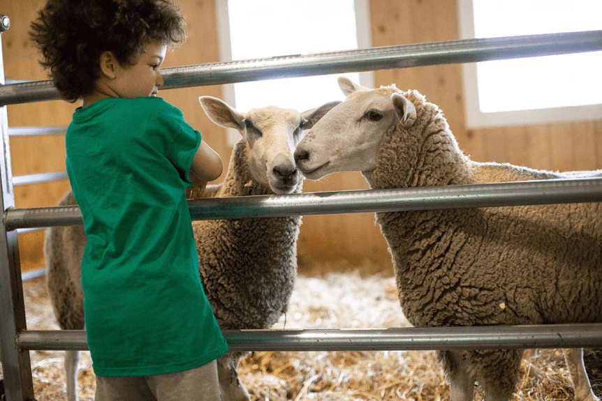 Image of boy with sheep