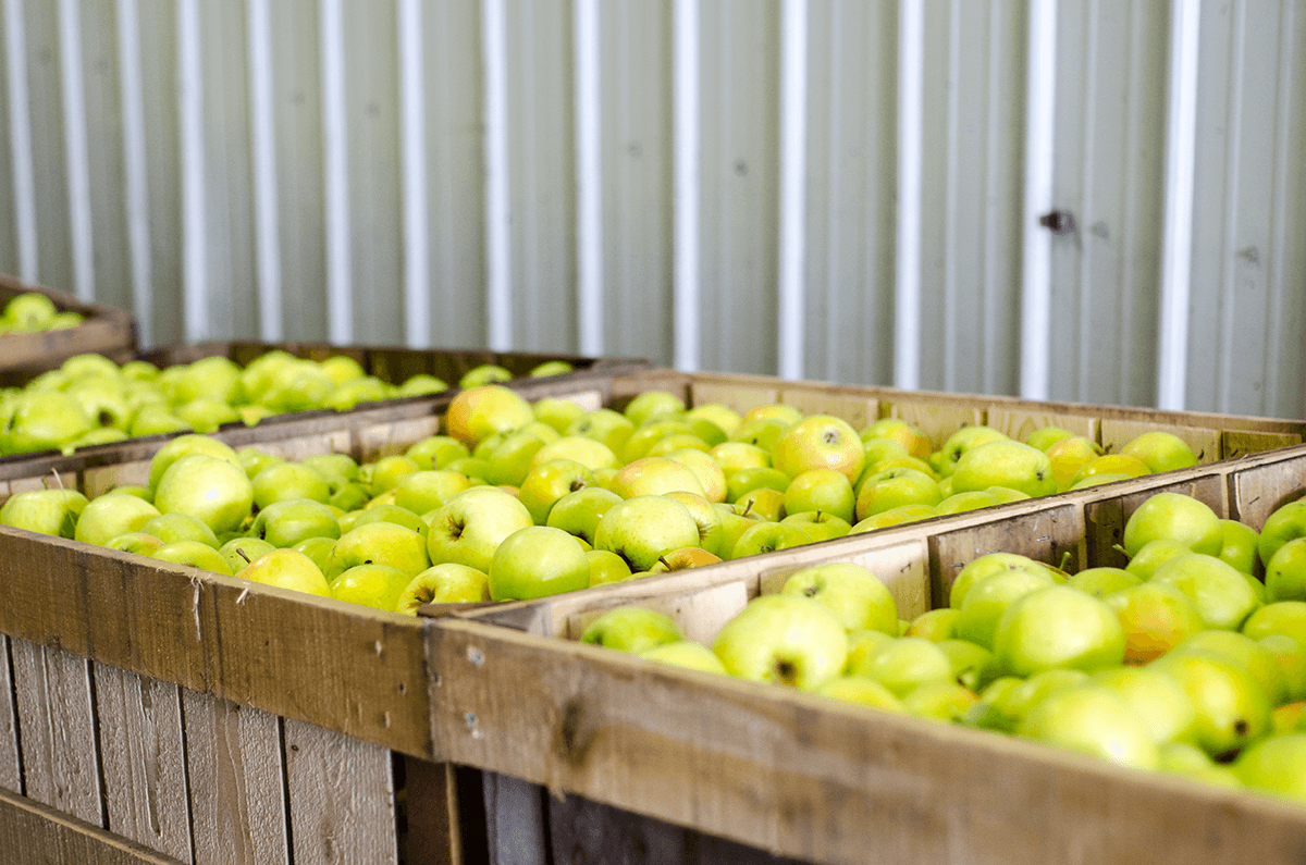 Image of apples in bins