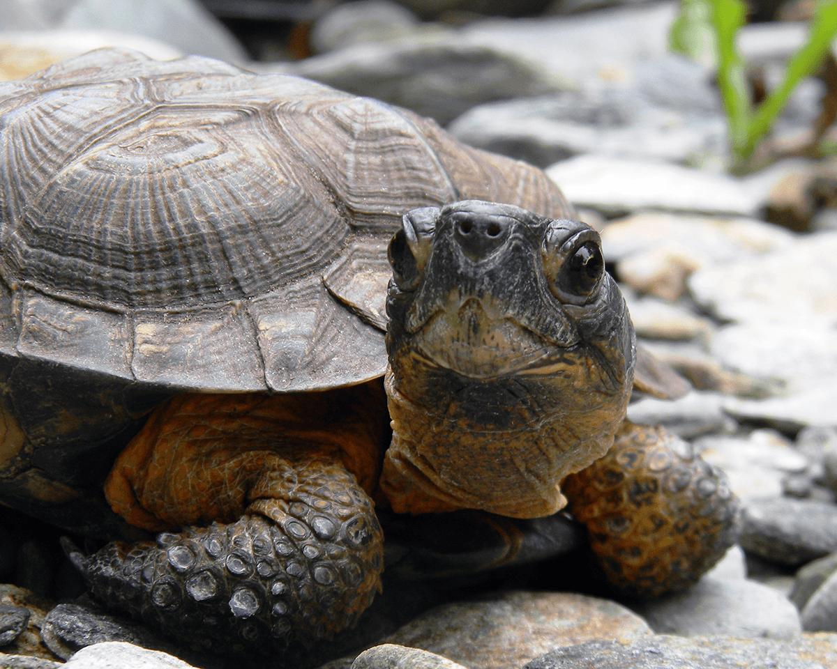 Image of Amelia the turtle