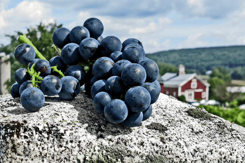 Image of grapes on granite