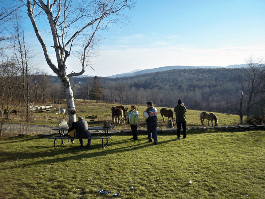 Image of people looking at animals in late fall