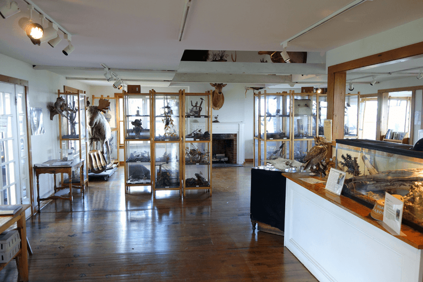 Image of the inside of the Southern Vermont Natural History Museum