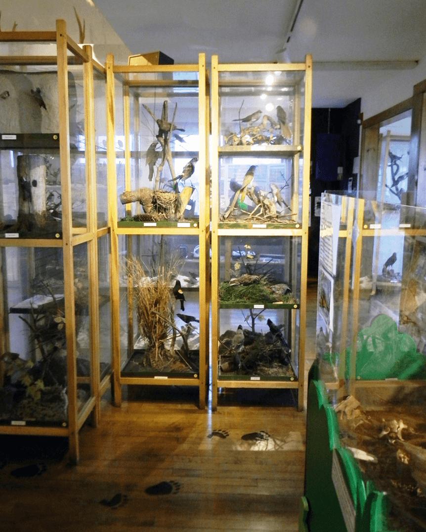 Image of exhibits