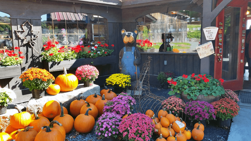 Image of pumpkins and flowers outside the store