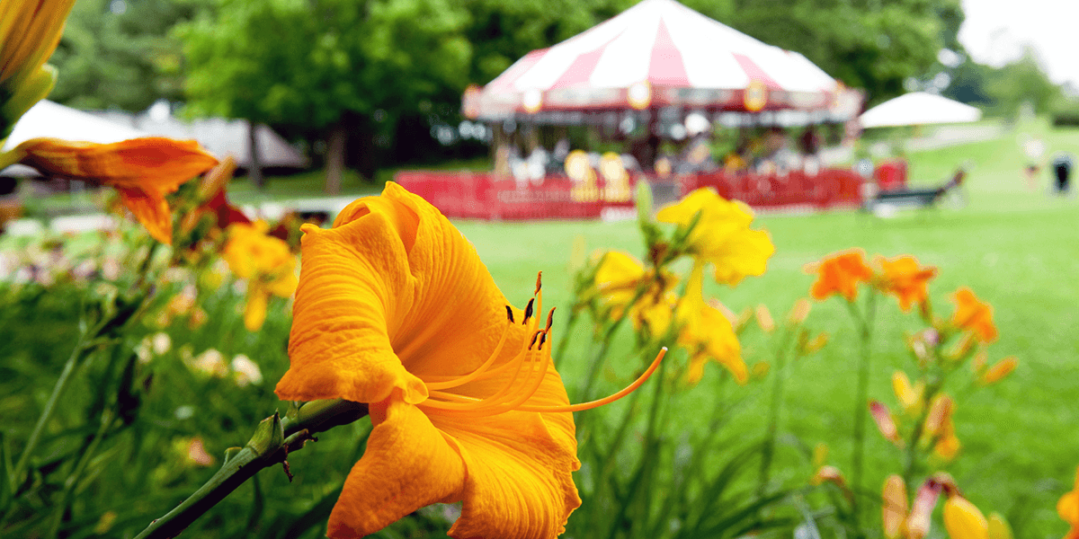Image of lilies at Shelburne Museum