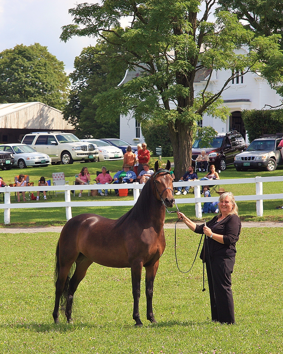 Image of woman holding UVM Perlee from the UVM Morgan Horse Farm