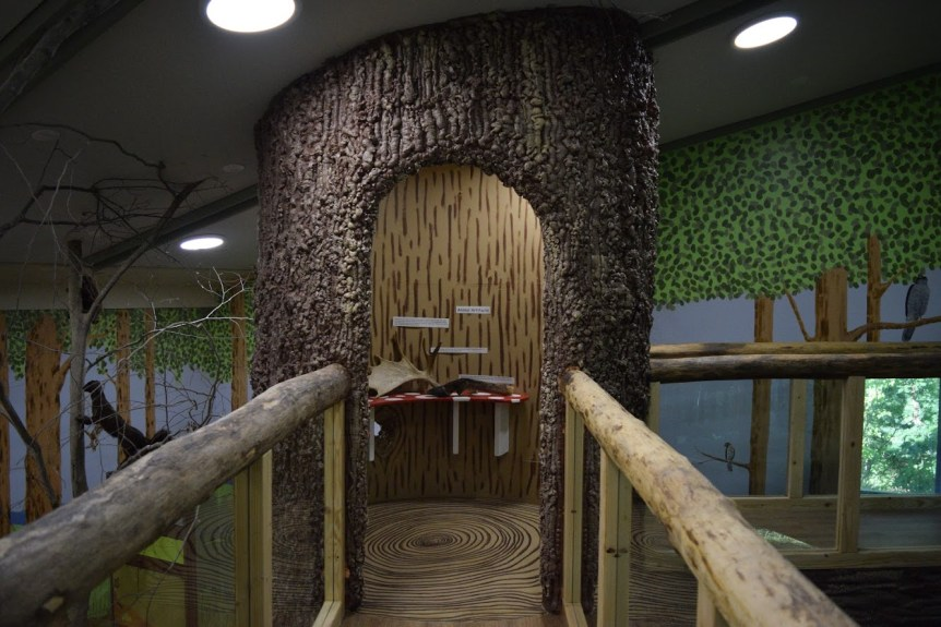 Image of VINS forest exhibit