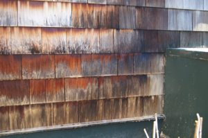 Cedar shake shingles with mold and a fizzy solution of eco-friendly detergents that will be soft washed off in Waitsfield, VT