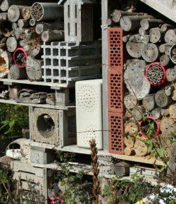 Buginn insectenhotel