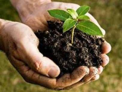 compost-het-zwarte-goud