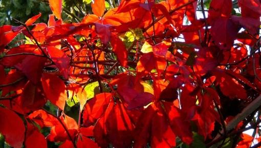 Herfstkleuren van bladeren