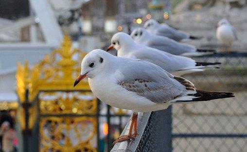 Aves en las Tullerias por Rog01(CC BY 2.0