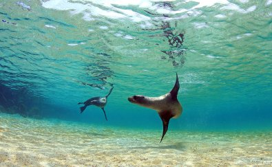 Otarinos, Islas Galápagos, Ecuador