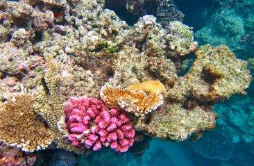 Imagen: Gran Barrera de Coral porKyle Taylor, (CC BY-SA 2.0)