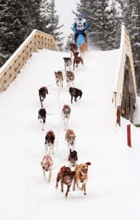 Valjakkourheilun talvilajien EM-kilpailut, Sled dog sports on snow European Championships 7.-9.3.2014, Rautavaara, Finland