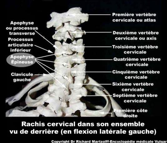 Image Photo Rachis Cervical Vu De Derrire Os Et