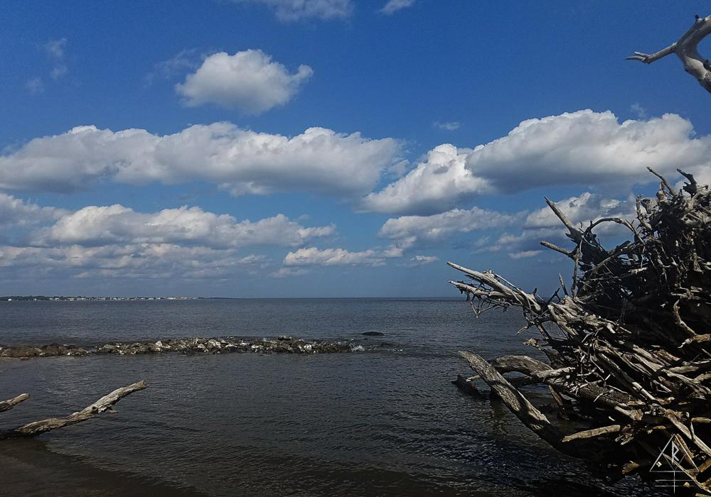 The northern corner of Driftwood Beach, Jekyll Island.