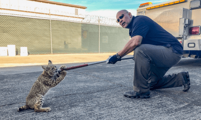 Animal Control Supervisor Mike Cathcart with Bob Von Cat! (City of Victorville//Twitter)