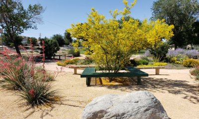 An example of drought tolerant plants at Center Street Park in Victorville. (City of Victorville)