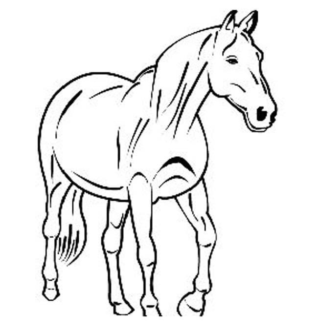 koně 8 omalovánka online