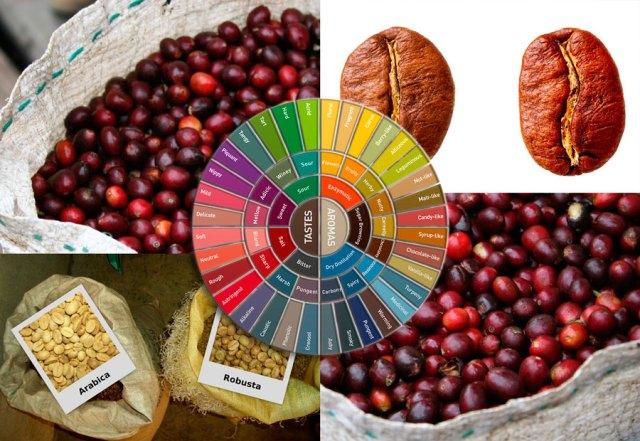 kava vrste kave arabica robusta uzgoj kave
