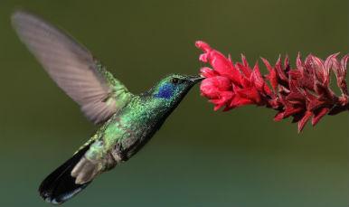 colibri2