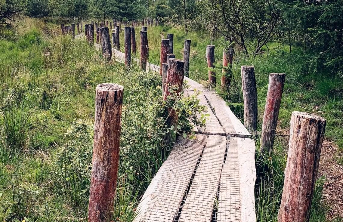 wandelroute dwingelderveld plankenpad